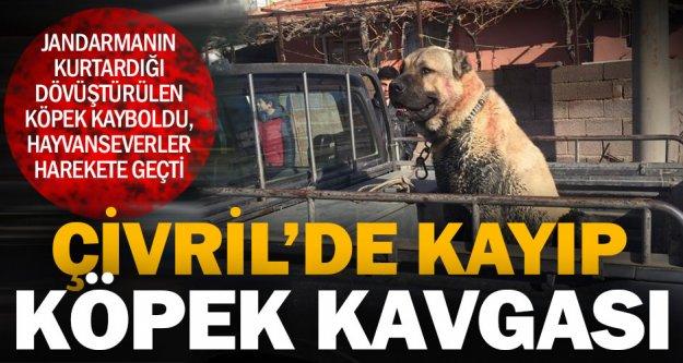 Kurtarılan köpek kayboldu, hayvanseverler harekete geçti