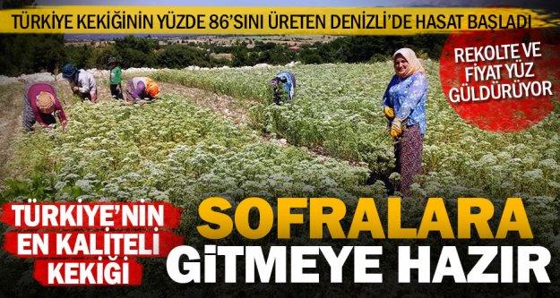 Türkiye'nin kekiğinin hasadı başladı