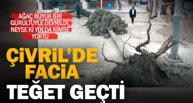 Çivril'in orta yerindeki ağaç devrildi