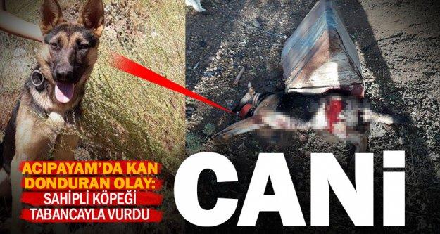 Acıpayamlı cani, ruhsatsız tabanca ile köpeği öldürdü