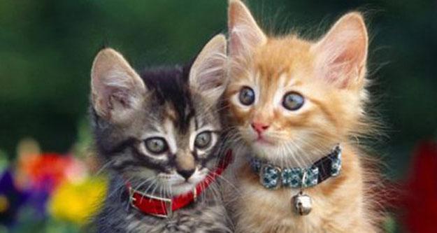 Evcil hayvan ticareti yapanlara eğitim