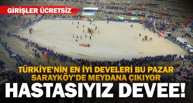 Deve güreşi tutkunları bu pazar Sarayköy'de buluşuyor