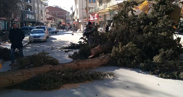 Fırtına ağacı devirdi