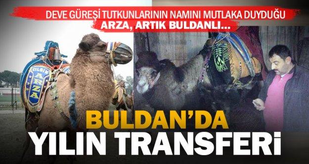Namını tüm Türkiye'nin duyduğu güreşlerin yenilmez devesi Arza artık Buldanlı