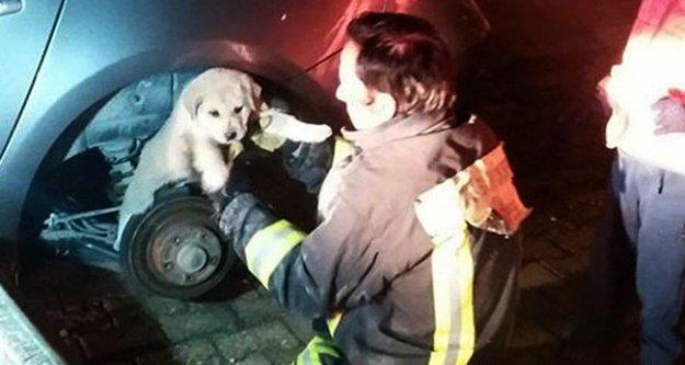 Otomobilin tekerleğine sıkışan köpek kurtarıldı