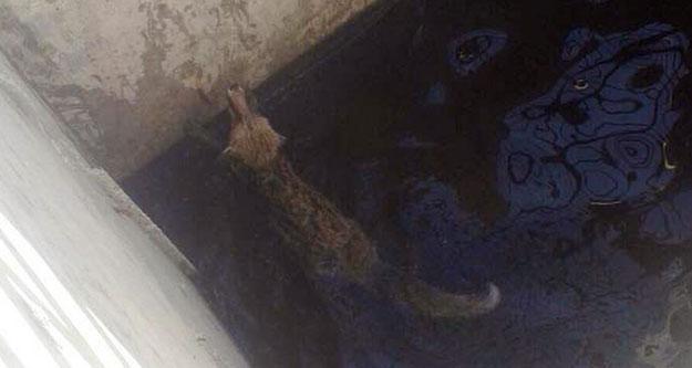 Sulama havuzuna düşen tilkiyi itfaiye kurtardı
