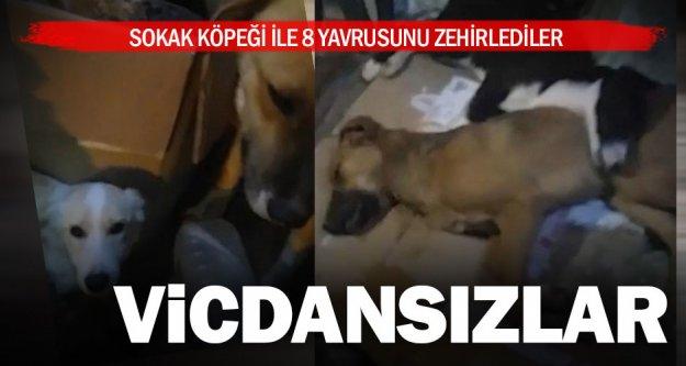 Zehirlenen köpekleri Hayvan Dostları Derneği üyeleri kurtardı
