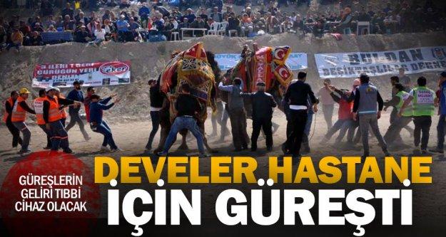 Buldan'da develer hastane yararına güreşti