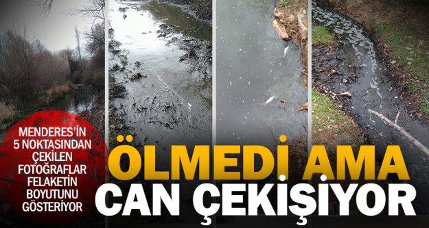 Menderes'in can çekiştiğini gösteren son fotoğraflar