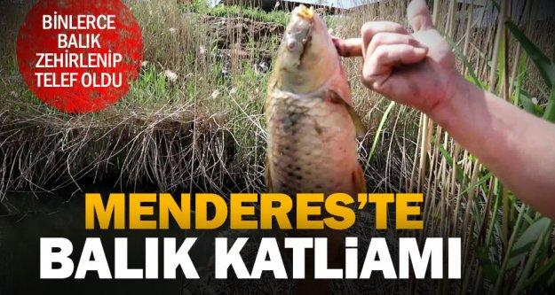 Menderes'teki kirlilik nedeniyle binlerce balık öldü