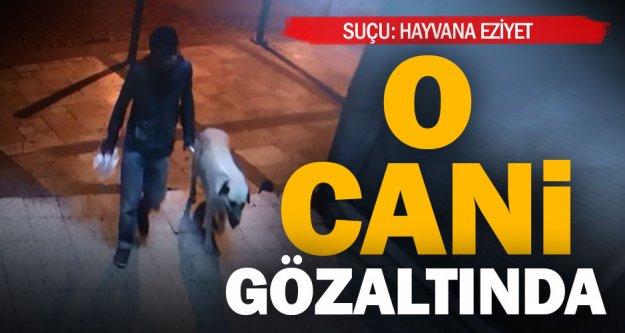 Köpeği öldürüp tecavüz eden zanlı yakalandı