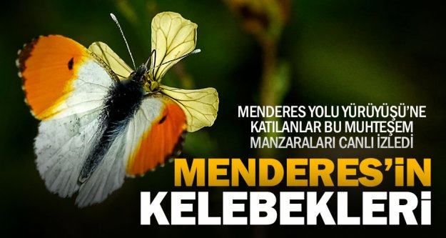 Menderes'in birbirinden güzel kelebekleri