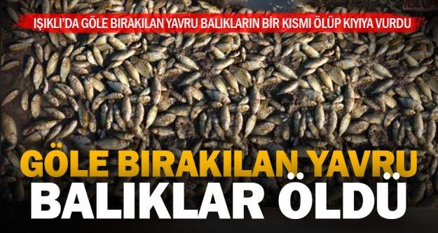 Çivril Işıklı gölüne bırakılan yavru balıklardan 10 bin kadarı öldü