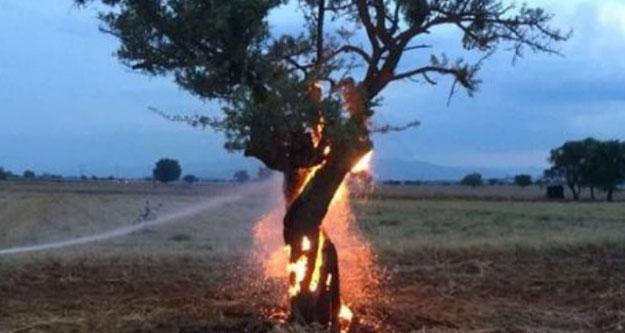 Bir garip ağaç yangını