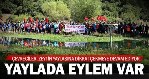 Çevreciler Zeytin Yaylası'na tekrar dikkat çekti