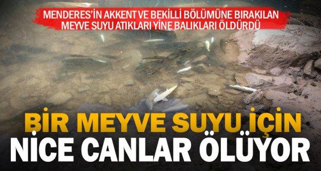 Meyve suyu atıkları Menderes'te yine balıkları öldürdü
