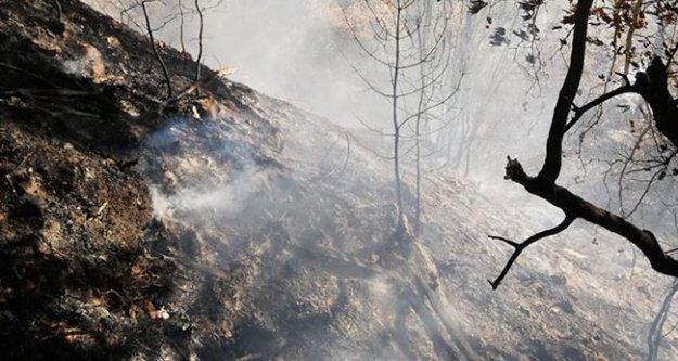 Çameli'de çıkan yangında 4 dönüm orman yandı
