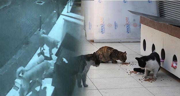 Sokak köpekleri kedi evine saldırdı