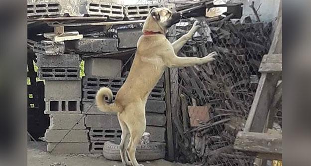 Başkanın köpeği çalındı, bulana ödül var