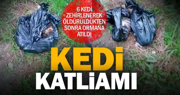 Ormanlık alanda poşetler içinde 6 kedi ölüsü bulundu