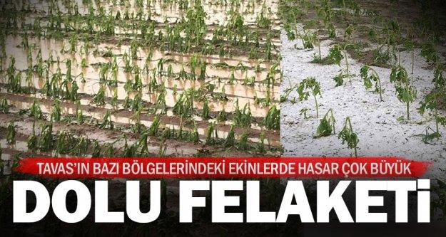 Dolu yağışı özellikle ayçiçeğine büyük zarar verdi