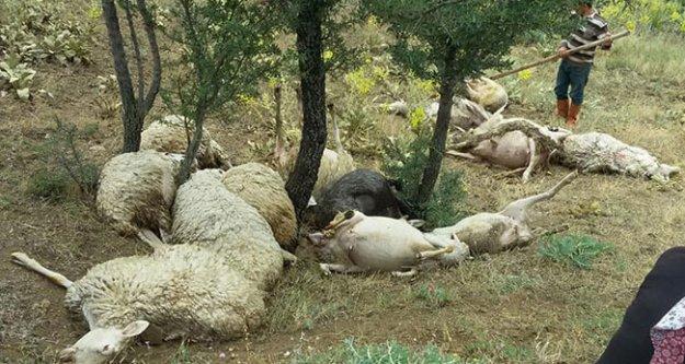 Yıldırım düştü; 15 koyun telef oldu