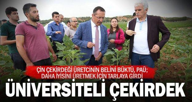 Pamukkale Üniversitesi, çerezlik ayçiçeği üretecek