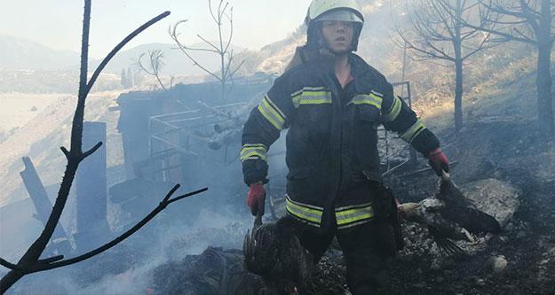 Yangında kediler telef oldu, tavukları itfaiye kurtardı