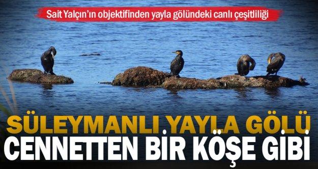 Buldan Süleymanlı Yayla Gölü'ndeki canlı çeşitliliği büyülüyor