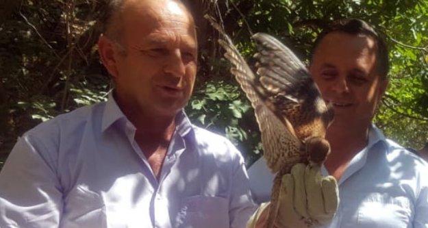 Yırtıcı kuşu sudan kurtardı, 25 gün baktı