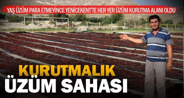 Kurutmalık üzümler futbol sahasına serildi