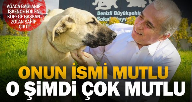 Ağaca bağlanıp işkence edilen köpeğe 'Başkan' koruması