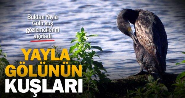 Buldan Yayla Gölü kuş gözlemcilerini ağırladı