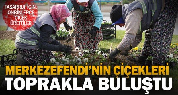 Merkezefendi Belediyesi'nin ürettiği çiçekler toprakla buluştu