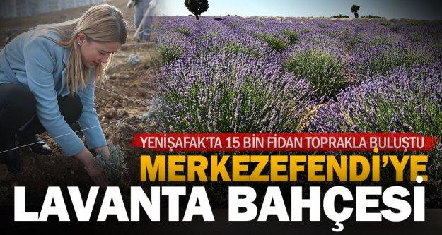 Merkezefendi Belediyesi'nden Yenişafak'a lavanta bahçesi