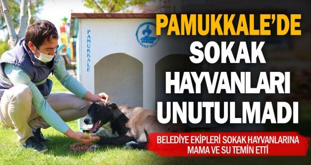 Pamukkale Belediyesi sokak hayvanlarını unutmadı