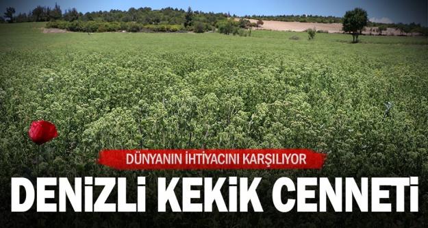 Kekik kenti Denizli'den 60 milyon dolar ihracat hedefi