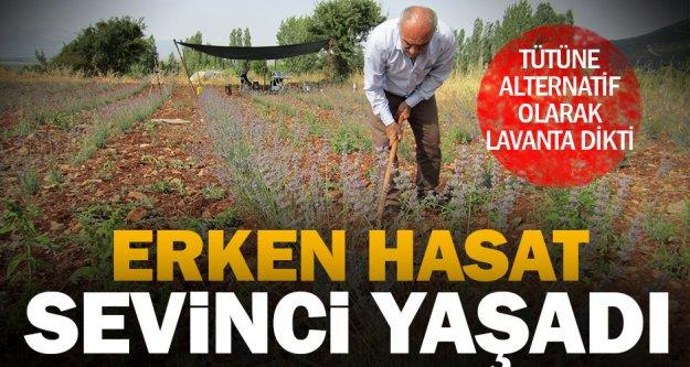 Tavas'ta tarlasına lavanta eken çiftçi ilk hasadı yaptı