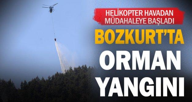 Bozkurt'ta orman yangını