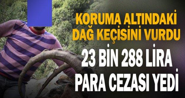 Koruma altındaki dağ keçisini vurdu 23 bin 288 lira para cezası yedi