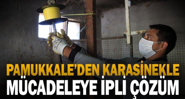 Pamukkale Belediyesi'nden Karasinekle Mücadeleye İpli Çözüm