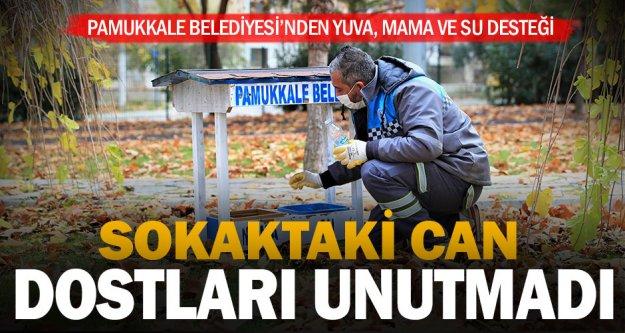 Pamukkale Belediyesi, sokaktaki can dostları unutmadı