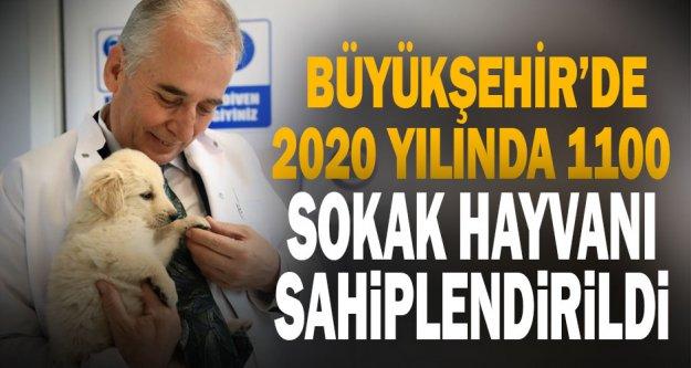 2020 yılında 1100 sokak hayvanı sahiplendirildi