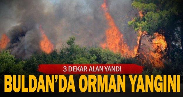 Buldan'da çıkan orman yangınında 3 dekar alan zarar gördü