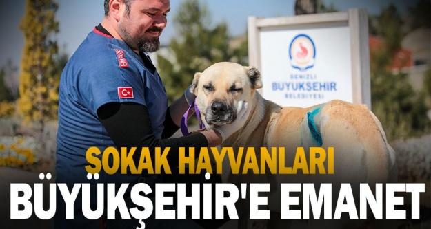 Sokak hayvanları Büyükşehir'e emanet