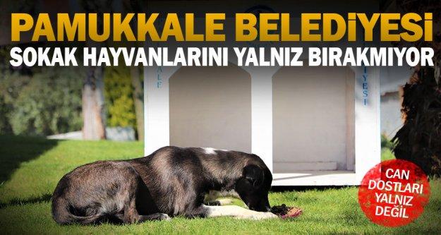 Pamukkale Belediyesi, sokak hayvanlarını yalnız bırakmıyor