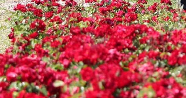 Merkezefendi kendi ürettiği çiçeklerle tasarruf sağlıyor
