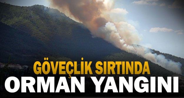 Göveçlik Mahallesi'nde orman yangını