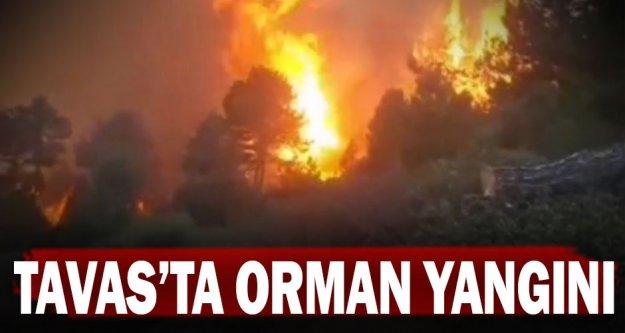 Tavas'ta orman yangını