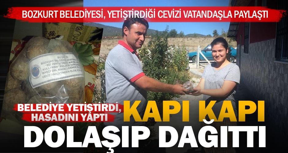 Bozkurt Belediyesi ceviz yetiştirdi, mahsulü halkla paylaştı